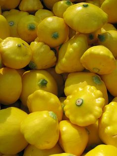 yellow scallop squash...