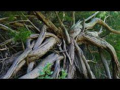 Virginia Beach's jungle and wetlands in 4K.