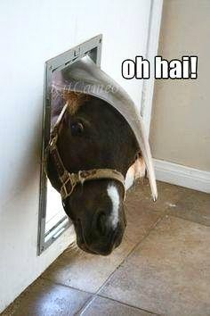 37 Funny Animal Pictures That Will Make Your Day - Horses Funny - Funny Horse Meme - - 37 Funny Animal Pictures That Will Make Your Day The post 37 Funny Animal Pictures That Will Make Your Day appeared first on Gag Dad. Funny Horse Memes, Funny Horses, Funny Animal Jokes, Cute Horses, Pretty Horses, Horse Love, Funny Animal Pictures, Cute Funny Animals, Animal Memes