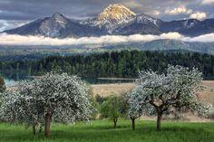 Piece of spring By: Marius Sabo - Pixdaus What A Wonderful World, Beautiful World, Beautiful Places, Beautiful Pictures, Beautiful Scenery, Simply Beautiful, Amazing Places, Great Smoky Mountains, Prado