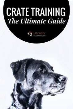 A COMPLETE and FREE guide to crate training, covering why and how to crate train a dog or puppy, during the day, overnight, even if you work full time. Training A Lab Puppy, Training Your Dog, Best Puppies, Dogs And Puppies, Labrador Puppies, Labrador Retrievers, Puppy Crate, Puppy House, Crate Training