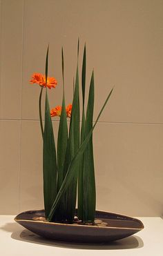 Free Style -Gladiolus leaves and Gerbera. Straight lines, surface leaves.: Free Style -Gladiolus leaves and Gerbera. Straight lines, surface leaves. Ikebana Arrangements, Ikebana Flower Arrangement, Modern Flower Arrangements, Arte Floral, Simple Flowers, Beautiful Flowers, Exotic Flowers, Blue Flowers, Flower Show