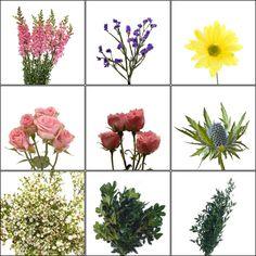 (Multi-Color) Wildflower Pack