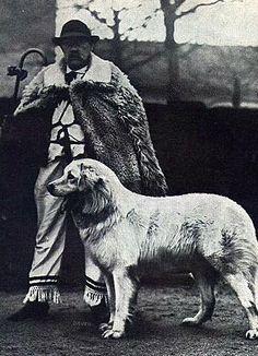 Kuvasz breed history. The Shepherd, Double Ring, Vintage Dog, Folk Music, Sheltie, Livestock, My Animal, Hungary, Animals And Pets