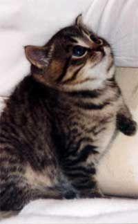 Fatty chubby kitties