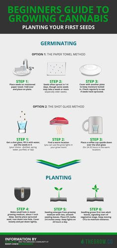 Beginners guide to growing weed. Planting your first cannabis seeds in simple, doable steps that are proven to work.