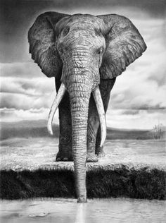 Animal Pencil Drawings by Francoclun - Elephant