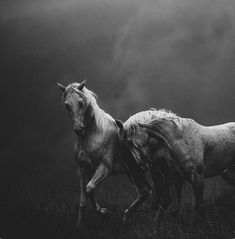 Dramatic black and white horse photograph All The Pretty Horses, Beautiful Horses, Animals Beautiful, Horse Photos, Horse Pictures, Palomino, Equine Photography, Animal Photography, Photography Degree
