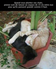 """""""When planting your cats make sure to space them 6 inches apart so they have room to grow."""""""