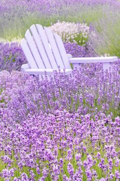 Photography - French Lavender Fields, Purple Chair, Romantic Home Decor Nature Photography French Lavender Fields by GeorgiannaLaneNature Photography French Lavender Fields by GeorgiannaLane French Lavender Fields, Lavender Cottage, Romantic Home Decor, Romantic Homes, Romantic Nature, Lavender Flowers, Purple Flowers, Beautiful Gardens, Beautiful Flowers