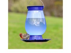 Bird Waterers: The Importance <p>of a Water Source for Birds
