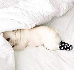 French Bulldog Cuteness #buldog