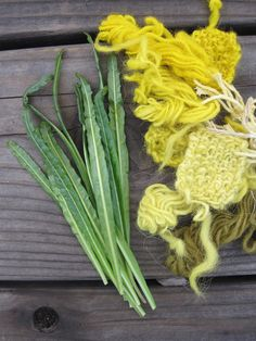 Weld Seed Reseda luteola Natural Dye Plant 2015 by EcotoneThreads