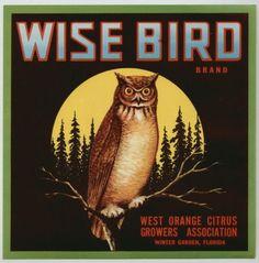 Wise Bird Vintage Winter Garden Florida Citrus Label Owl An Original Label | eBay