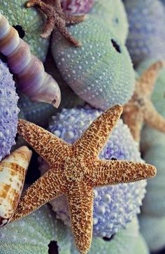Sea star :) by ceca photo mer, marine life, sea creatures, ocean I Love The Beach, Ocean Life, Ocean Beach, Nature Beach, Shell Beach, Beach Walk, Beach Fun, Marine Life, Belle Photo