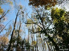 Die Bäume verlieren im Herbst ihre Blätter im Teutoburger Wald in Oerlinghausen bei Bielefeld