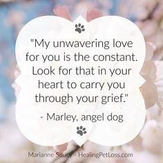 Healing Pet Loss with Marianne Soucy Poem Quotes, Poems, Pet Grief, Book Letters, Lhasa Apso, Pet Loss, Books To Buy, Animal Quotes, Brighten Your Day