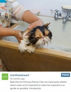 Someone seems to have a bit of an attitude today! But if Martha Stewart is your mom, you have to be clean.  - GoodHousekeeping.com