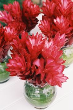 gingers cut short in vases or jars