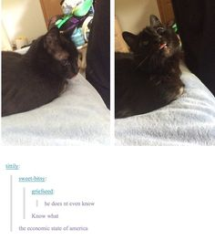 Cute animals - Dump of things that made me breathe out my nose just a little harder Cute Funny Animals, Funny Animal Memes, Cute Baby Animals, Cat Memes, Funny Cute, Cute Cats, Funny Memes, Hilarious, I Love Cats
