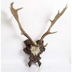Antlers with Oak Leaf Plaque
