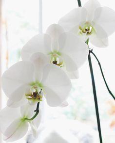 ¿Trabajas desde casa? En el #postdeldia te damos 8 #tips para maximizar tu productividad (link en la bio) #orchid #fashion #blog #decoration