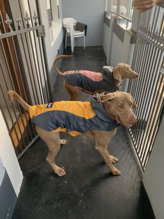 New Raincoat Jackets Best of all we got new winter raincoat jackets. Winter Beach, Beach Day, New Sibling, Raincoat Jacket, One Year Old, Weimaraner, Elsa, Dogs, Pet Dogs