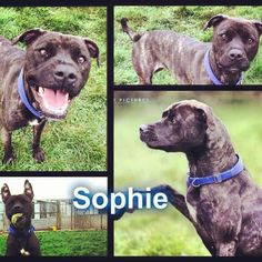 The lovely Sophie is finally safe :) No more sadness in this girls life :) #safeandsound #rescue #rescuedog #dontshopadopt #dog #newlife #happy #love #givesomuch #giveadogachance #somanyneedanewhome #adoption #pet #beautiful #bestfriend #mansbestfriend www.safe-and-sound.org