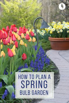 #Fall Is The Time To Plant Spring Blooming Bulbs Such As #tulips,