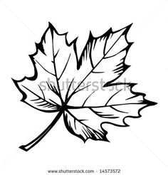 Maple Leaf Clipart Black And White   Clipart Panda   Free Clipart