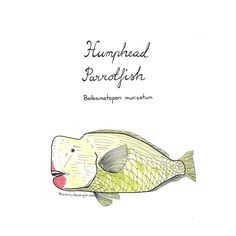 Sketch of the day no 761 in my monologue art journal: Humphead parrotfish. Bolbometopon muricatum