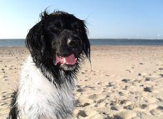 Jelle op het strand