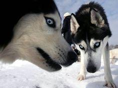 カッコイイ犬の画像をおまえらが貼ってく : まとめでぃあ