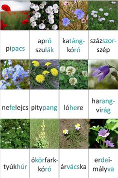 Letölthető memória kártyák - Down-szindrómával kapcsolatos hírek, információk, tények Nature Hunt, Tree Day, Activity Sheets, Help Teaching, Working With Children, Educational Activities, Earth Day, Science And Nature, Herbalism