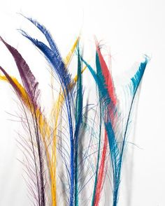 All Bleached and Dyed Peacock Feather Swords 25-35 inches 100 Pack (CHOOSE YOUR COLOR) #wedding #centerpiece #carnival #floral #millinery Diy Wedding, Wedding Decor, Wedding Ideas, Peacock Decor, Water Droplets, Curling Iron, Peacock Feathers, Hummingbirds, Costume Design