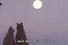 Art Aesthetic Pretty Pink Purple Sadboi SadEdit SadAnime Beautiful RetroArt Filter Artwork Quote Cats Moon Stars NightTime LateNight Kitten Kitty Meow Night Romantic Date View Love Cute Wholesome I Love You, Just For You, My Love, Mood Quotes, Life Quotes, Cat Quotes, Daily Quotes, Numb Quotes, Indie Quotes