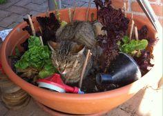 Veggie cat