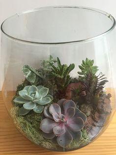 Sem espaço para plantar um jardim? Com um terrário você pode levar o verde para dentro de casa. Veja como fazer um terrário no Portal BBel.