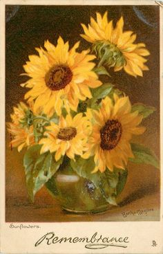 Sunflowers - cheerful, colorful, happy - State Flower of KS