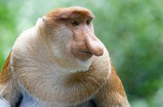 animais estranhos - Pesquisa Google
