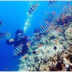 手を降って応える♪ 西表島は比較的浅い水深で、楽しめるポイントが多いと感じる。 #いりおもてじま #西表島 #おきなわ #沖縄 #うみ #海 #水中写真 #水中撮影 #ダイビング #スクーバダイビング #iriomoteisland #iriomotejima #ocean #okinawa #diving #scuba #scubadiving #underwater #underwaterworld #underwaterphotography #underwaterphoto #underwaterlife 2016/06/26 08:46:01