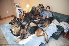 Meet the dog whisperer whose UNLEASHED harem of German Shepherds follow him wherever he goes (even to bed!) Leader of the pack: Augusto de Oliveira can walk huge groups of unleashed German Shepherd dogs obediently at his heels - they follow him everywhere, even to bed