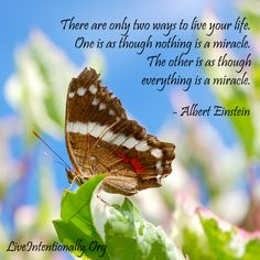 Inspirational quote: There are only two ways to live your life. One is as though nothing is a miracle. The other is as though everything is a miracle. -Einstein