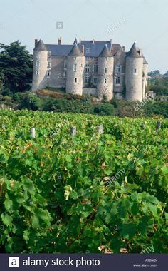 Chateau of Luynes Indre et Loire Loire Centre Loire Valley France Europe Stock Photo