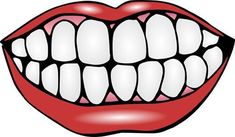 Mouth and Teeth Clipart - print out and laminate teeth for activities. Mouth and Teeth Oral Health, Dental Health, Dental Care, Health Care, Children's Dental, Dental Kids, Mund Clipart, Tooth Template, Teeth Clip