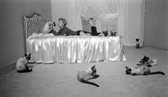 Kim Novak with the nine cats needed for the filming of Blee, Book, and Candle.