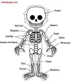 Resultado de imagen para como decorar un esqueleto movil