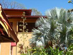 Villa with Bismarck Palm (Bismarckia Nobilis)