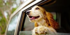 The Most Dog-Friendly Road Trip Destinations in the US