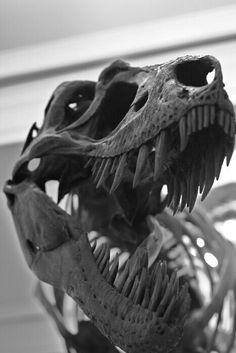Jax loves the Museum of Natural History! - T-Rex (Tiranosaurio Rex) Dinosaur Skeleton, Dinosaur Bones, Dinosaur Fossils, Prehistoric World, Prehistoric Creatures, Photographie Street Art, Jurassic Park World, Extinct Animals, Tyrannosaurus Rex